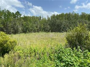 30607 STATE ROAD 54 WESLEY CHAPEL FL 33543 photo